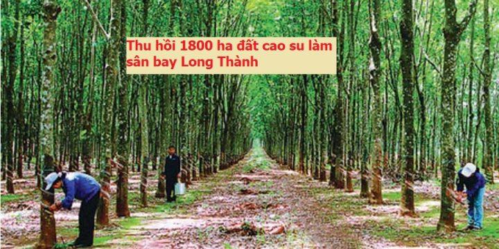 Thu hồi gần 1.800 ha đất của Cao su Đồng Nai để tái định cư cho sân bay Long Thành
